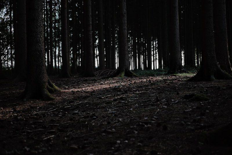 blick in einen dichter tannenwald im vogtland