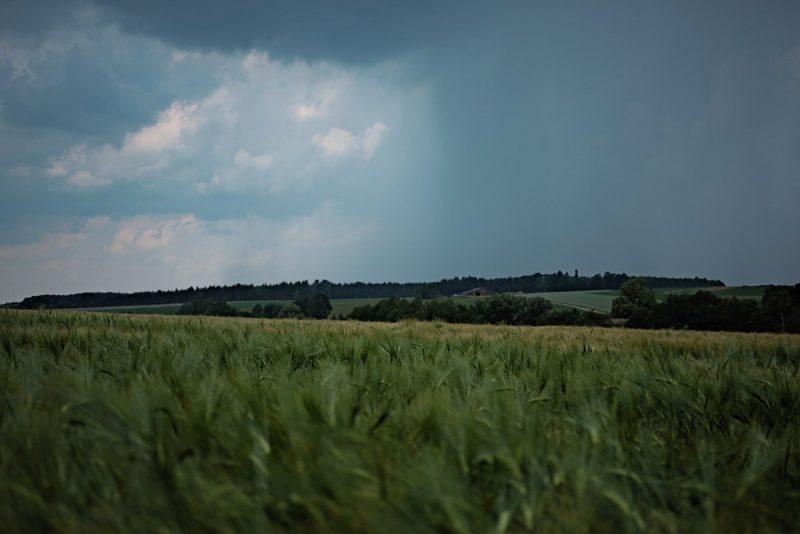 blich auf regenwolken über einem weizenfeld